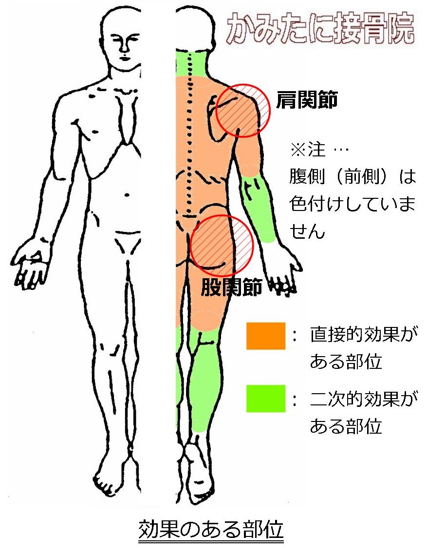 効果のある部位 初動負荷トレーニング 兵庫県宝塚市 かみたに接骨院 整骨院
