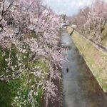 ちょっと岐阜へ行きました。。。